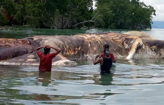 Левиафан, инопланетянин или просто кальмар? На берег Индонезии выбросило тело неизвестного животного огромных размеров