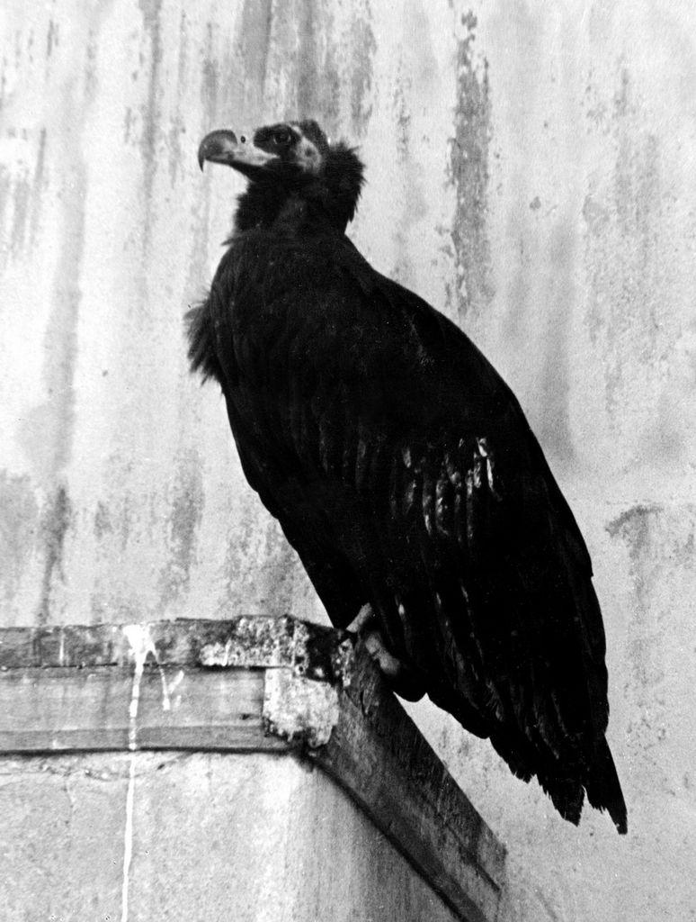 spbzoo11 Как ленинградский зоопарк пережил блокаду