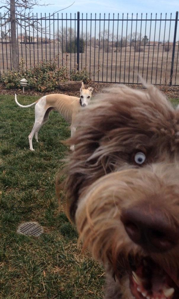 20 собак-засранцев, которые мастерски умеют портить фотографии