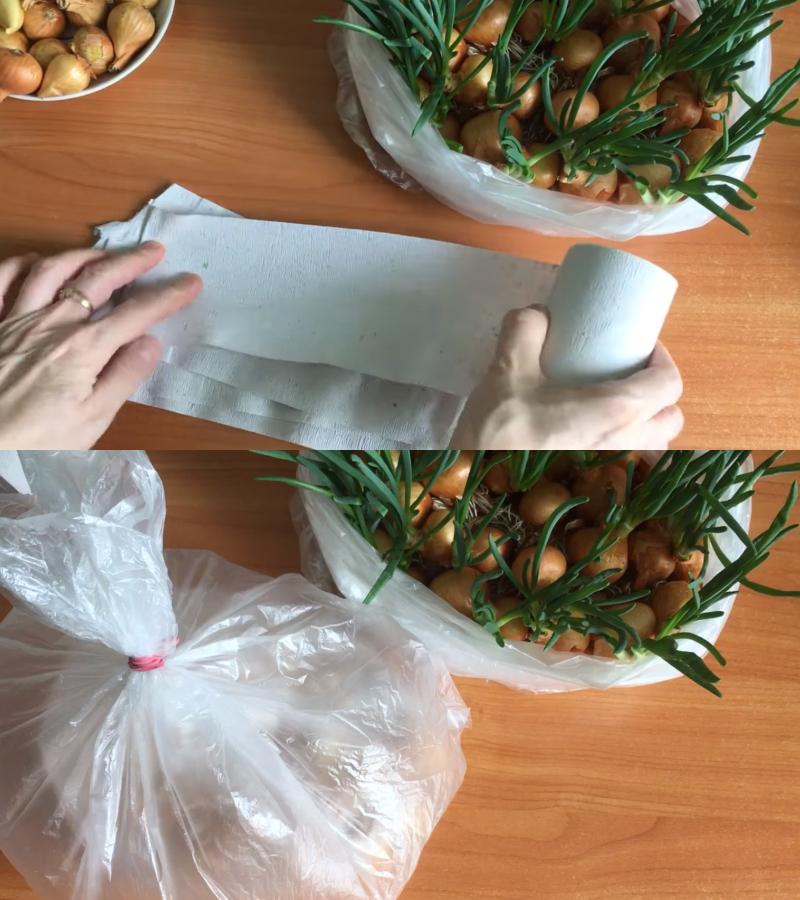 Как вырастить зеленый лук
