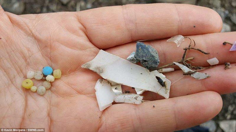 Экологи опубликовали шокирующие фото: белые медвежата играют с пластиком животные, загрязнение окружающей среды, новости, пластик, пластиковые отходы, фото, экология, экспедиция