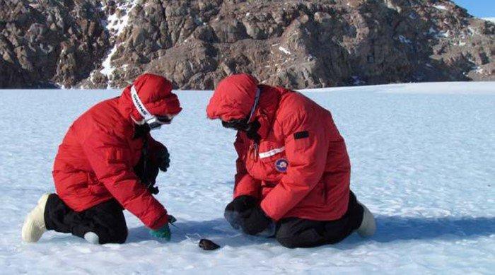 Удивительные находки Антарктиды
