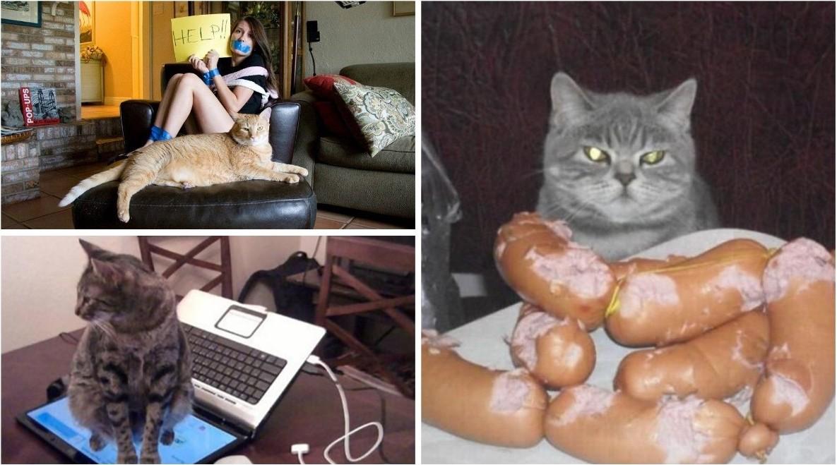 Когда кот в доме хозяин (21 фото)