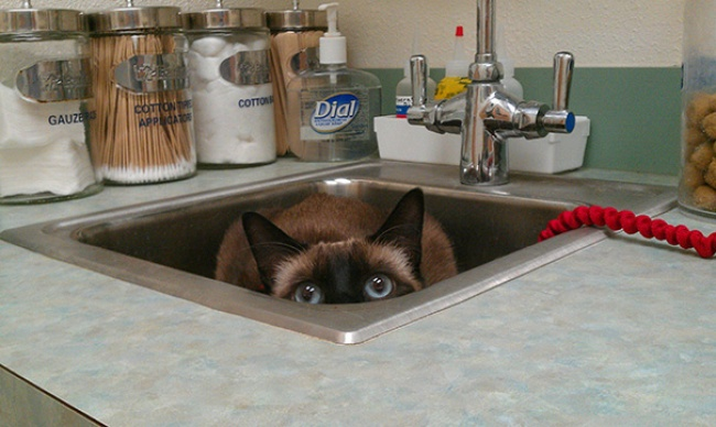 15 кошек, которые думают, что отлично спрятались