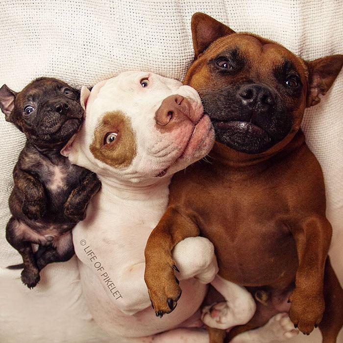 Спасенный щенок обрел двух заботливых друзей!