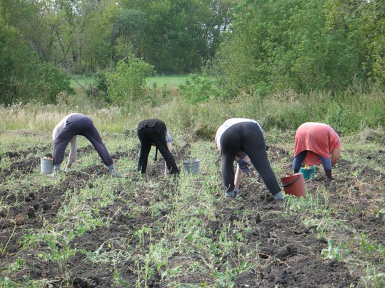 Праздник закончился: россияне вернутся на огороды