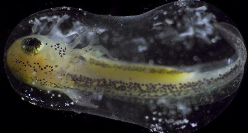 Люди заворожены таймлапс-видео, в котором одна клетка превращается в целый организм