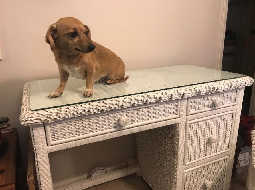 «Ход собакой» или как быстро продать мебель? На шкафу сидит собака и это не просто так…