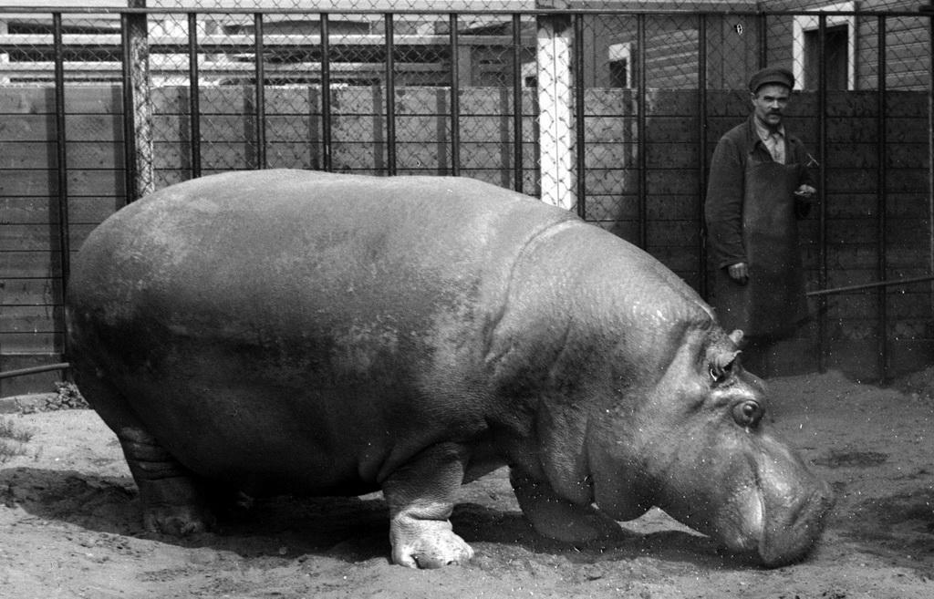 spbzoo04 Как ленинградский зоопарк пережил блокаду