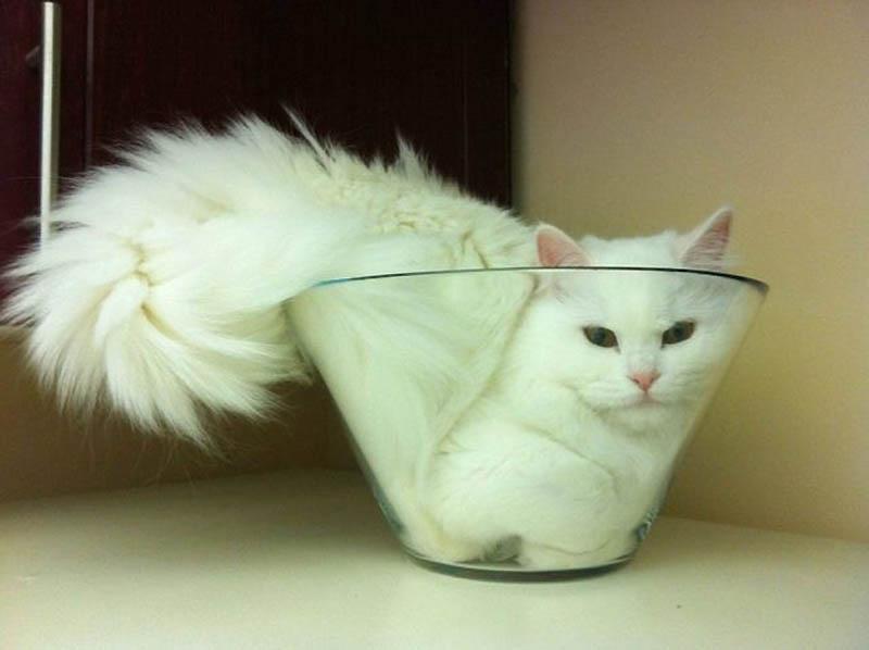 Идеальные места для отдыха — версия для котов