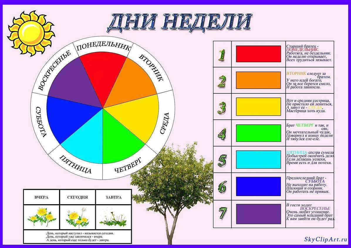 Развитие плода по неделям описание с картинками 5