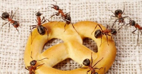 С помощью этих способов избавитесь от муравьев в доме!