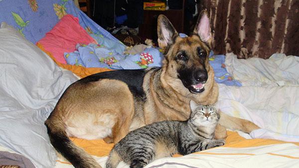 Зачем собаке кошка? Про нашу Тигру