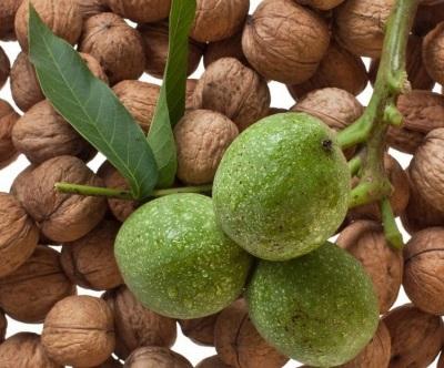 Зеленый грецкий орех богат множеством полезных витаминов и микро- и макроэлементов
