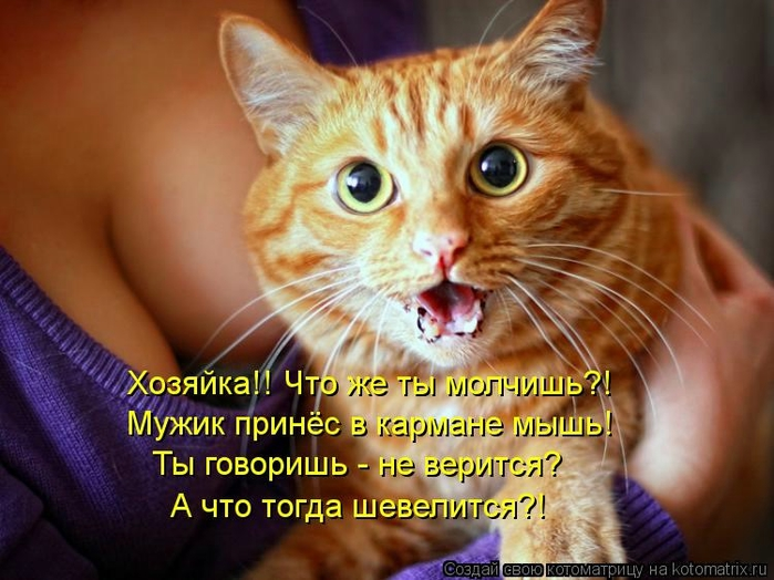 kotomatritsa_Ce (700x524, 252Kb)