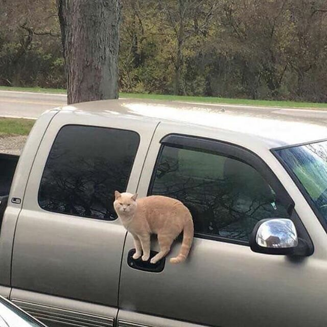 18 котов, которые плевать хо…