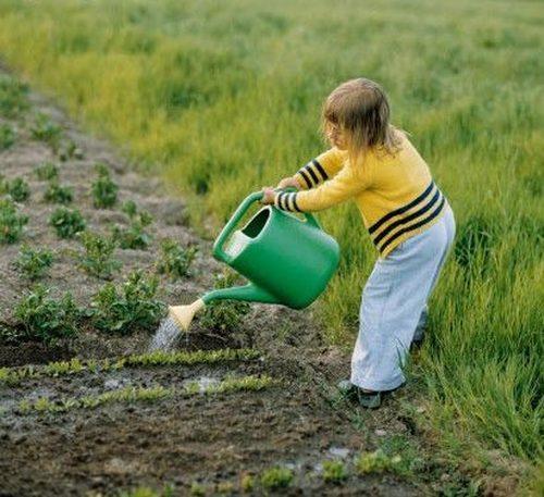 Поливать огород надо умеючи.
