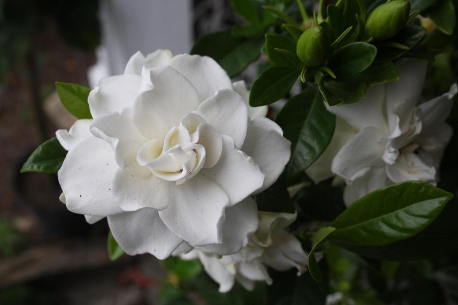 garden.xcyyxh.com