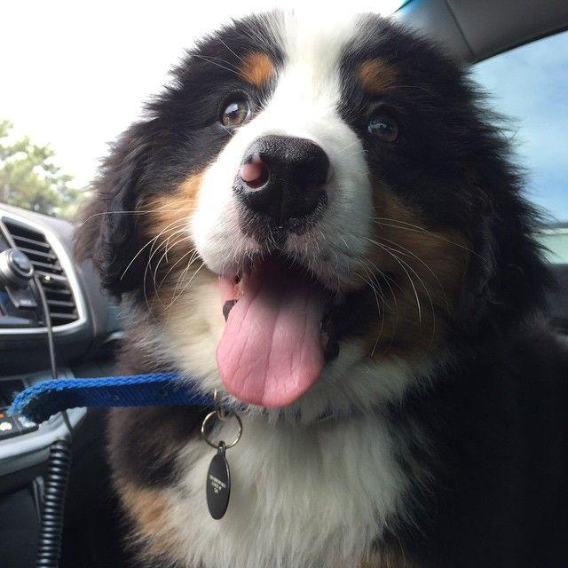 Причины, доказывающие, что иметь собаку проще, чем встречаться с девушкой