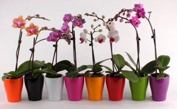 Проблемы при выращивании орхидей