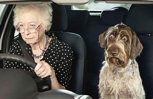 Старички путешествуют на автомобиле.