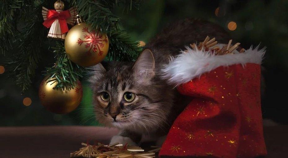 Ученые советуют: как правильно выбирать подарки