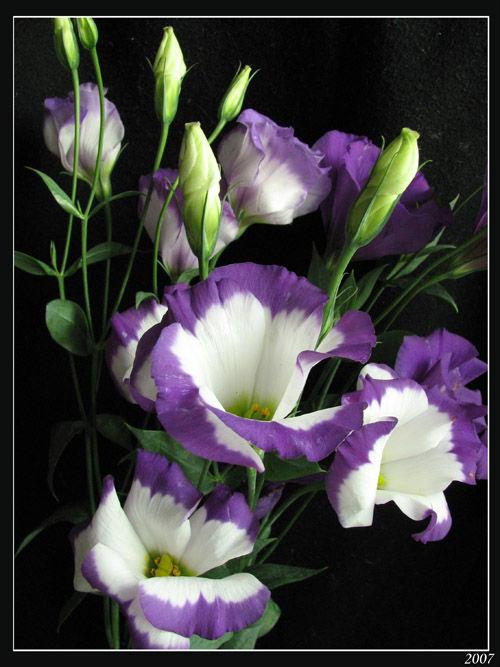 Цветы 63