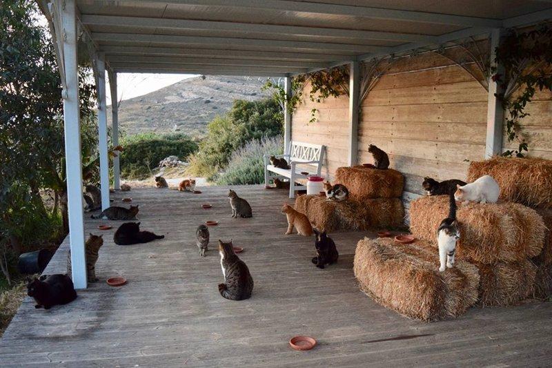 Как получать деньги, играя с кошками на прекрасном греческом острове