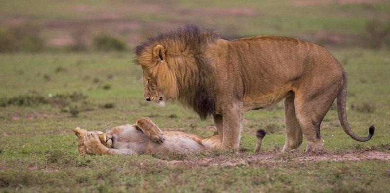 Самое смешное с конкурса Comedy Wildlife Photography Awards 2018