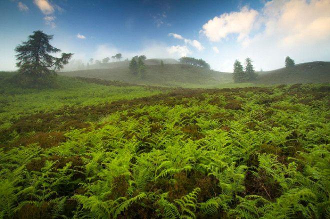 Зеленая и бескрайняя долина папоротников