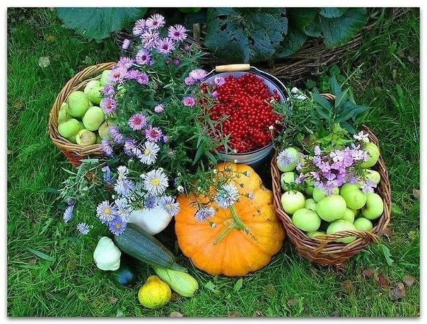 37 советов опытного огородника