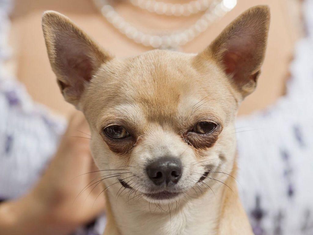 20 собак, которым можно давать «Оскара» — потрясающие эмоции на мордочках!