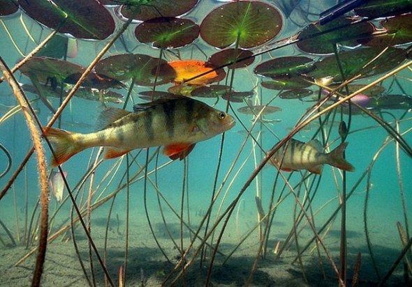 """Рыбалка: Ловля сазана осенью """" Рыбалка, все для рыбалки и о рыбалке"""