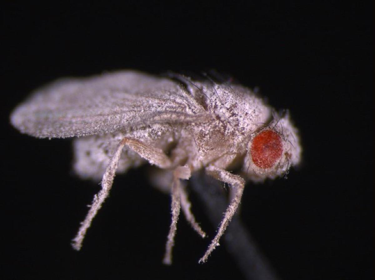 Запущенные учеными в космос мухи стали активно размножаться