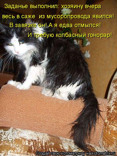 Котоматрицы :)