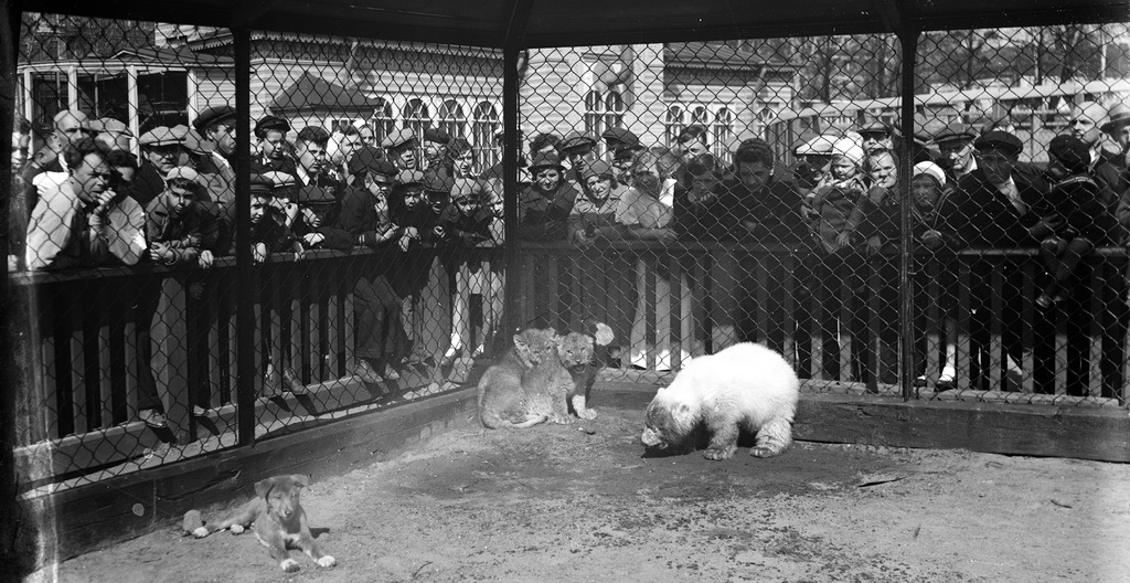 spbzoo13 Как ленинградский зоопарк пережил блокаду