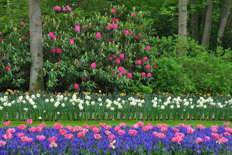 Весна в Голландии - яркое зрелище