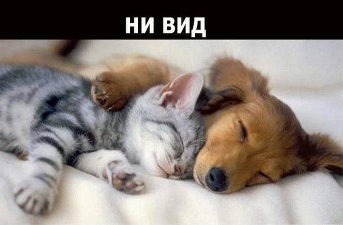 О дружбе и настоящих друзьях (19 фото)