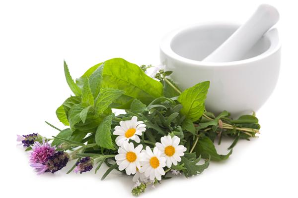 Лечебные растения для здоровья желудка