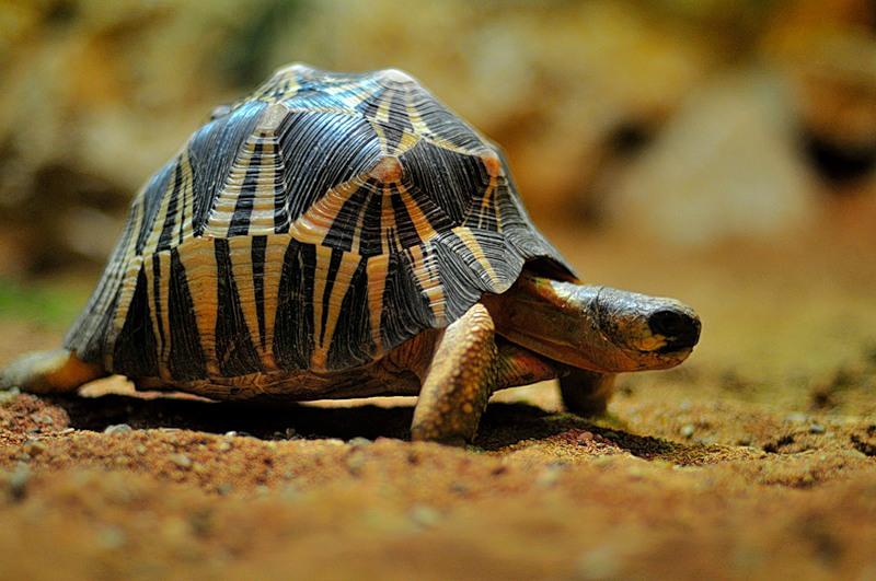 Животный мир Южной Африки
