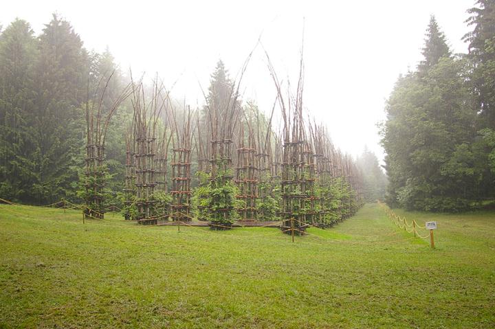 собор из деревьев джулиано маури (7)