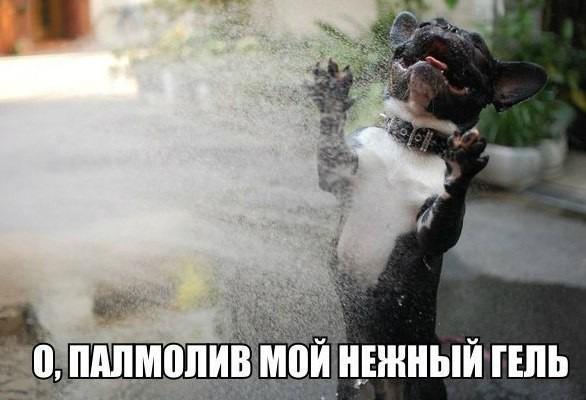 ПРИКОЛЬНЫЕ КАРТИНКИ С НАДПИСЯМИ.ЭДВАЙСЫ-41.