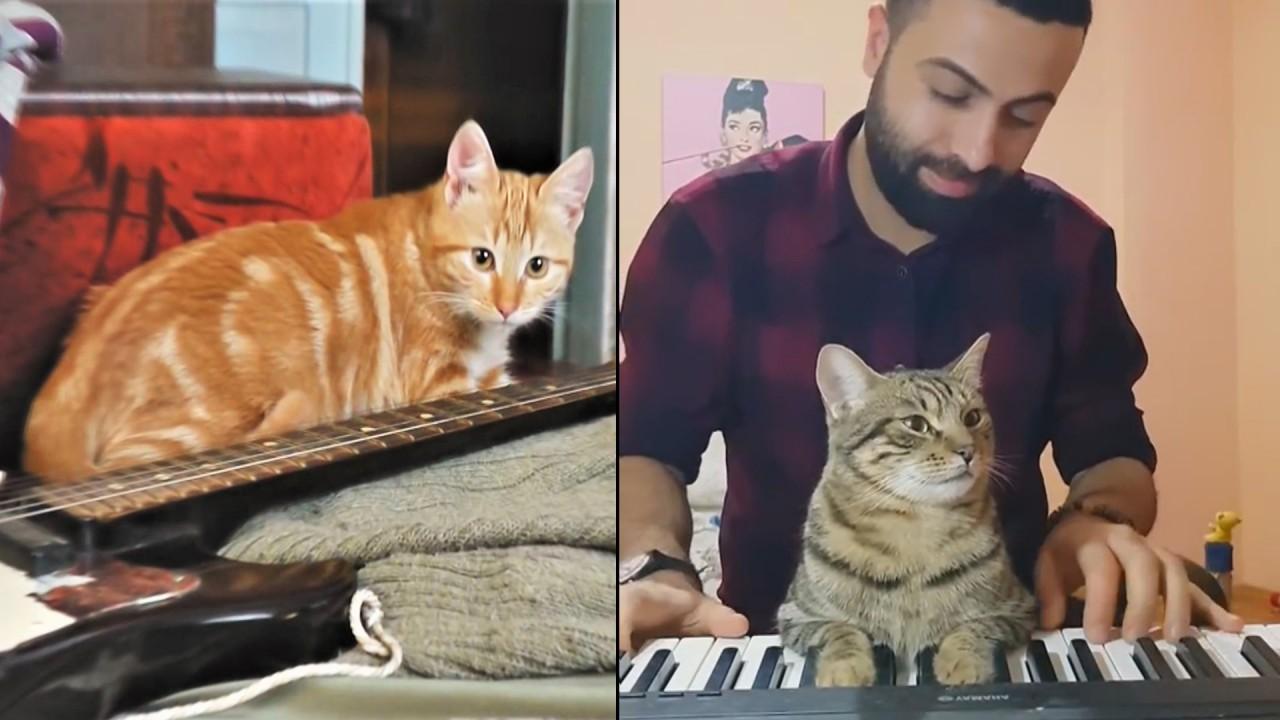 Животные певцы и музыканты