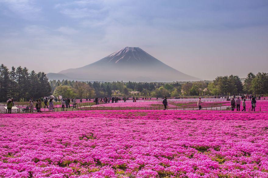 15 прекрасных причин отправиться в Японию