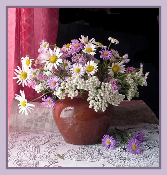 Луговые цветы России