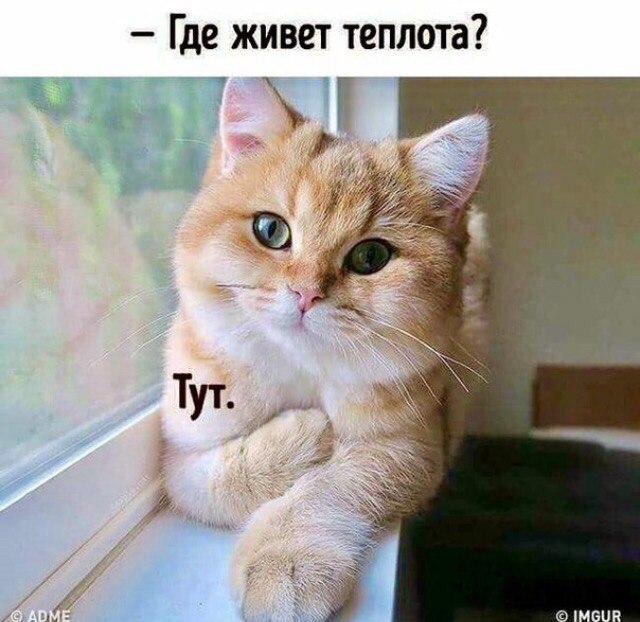 Теплота от кота