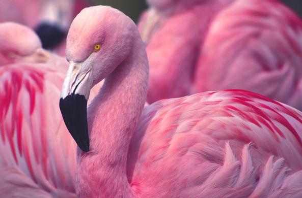 В Барнаульском зоопарке показали влюбленных фламинго