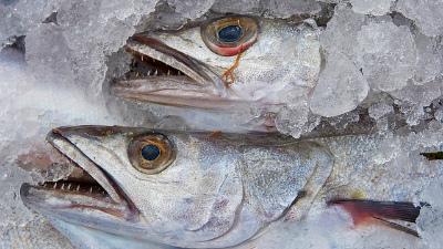 Четыре дела возбудили в связи с нарушениями на сахалинском рыбокомбинате