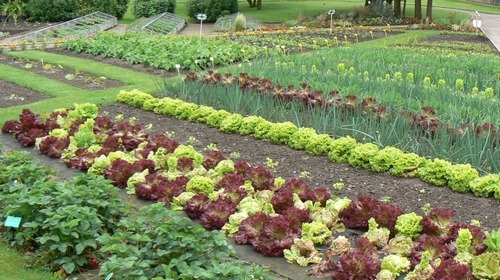 15 советов для садоводов. Пусть твоему участку завидуют все соседи.