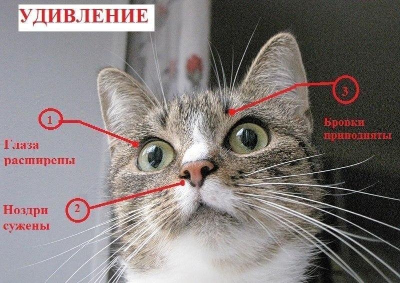 Как сделать так чтобы тебя полюбила кошка